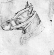 lovely study of a muzzle 1420-1450, italian