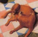 Medieval foxie?