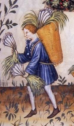 harvesting leeks in the 1390:ies