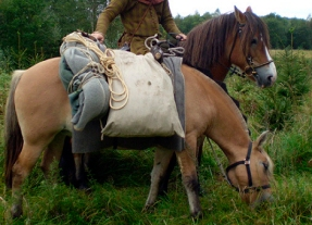 the same sack, carried by a sumpterhorse
